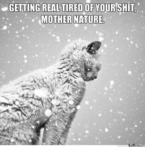 snow-cat_o_2191193