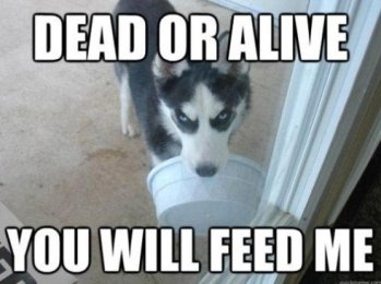 741-Feed-me